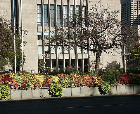 Toronto Photos :: Downtown :: Toronto. Fall blooming in downtown.