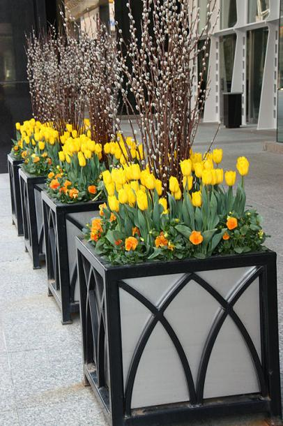 Toronto Photos :: Downtown :: Spring flowerbeds in downtown