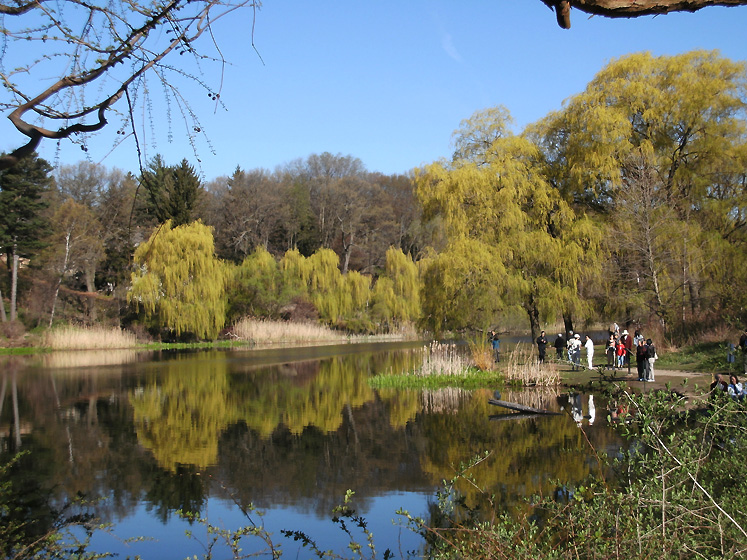 Toronto Photos :: Maya :: A pond in High Park