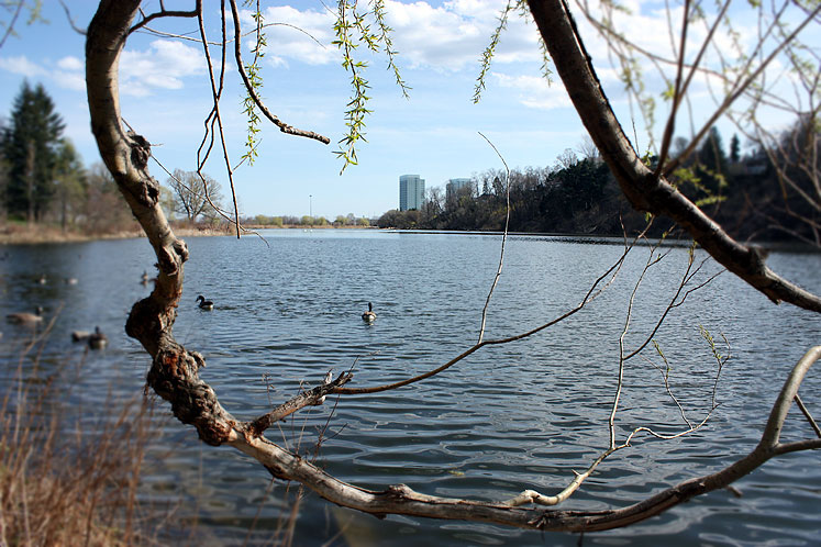 Toronto Photos :: Parks :: A view on the city from High Park