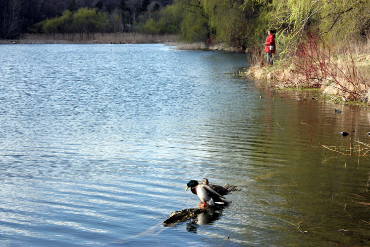 Toronto Photos :: High Park :: Fishing in High Park