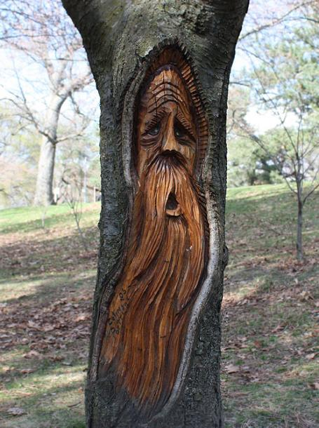 Toronto Photos :: High Park :: High Park. A face carved in the tree