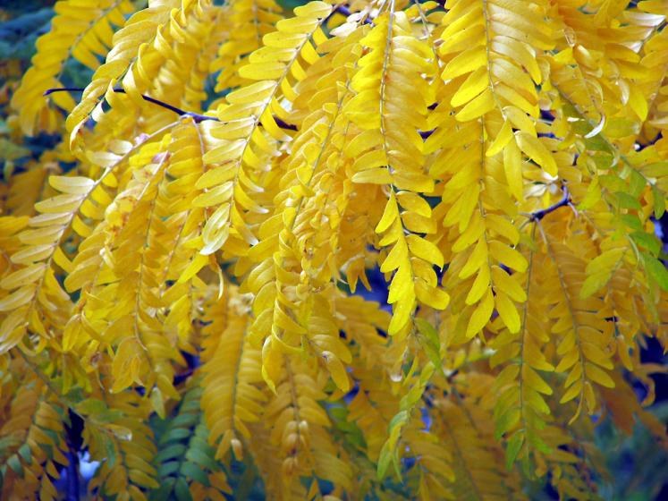 Toronto Photos :: Mel Lastman Square :: Fall colors