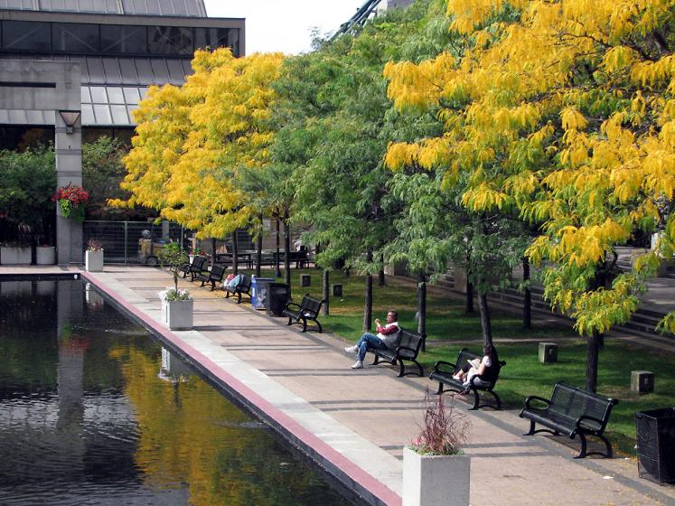 Toronto Photos :: Mel Lastman Square :: Fall colors in Mel Lastman Square