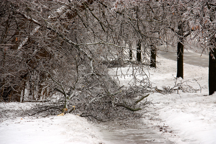 Toronto Photos :: Winter :: A walking path after the ice storm