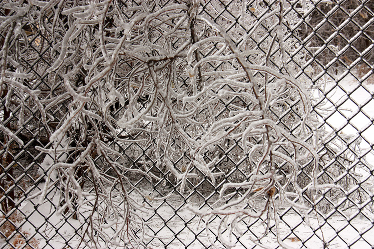Toronto Photos :: Winter :: A branch covered with ice on wire fence