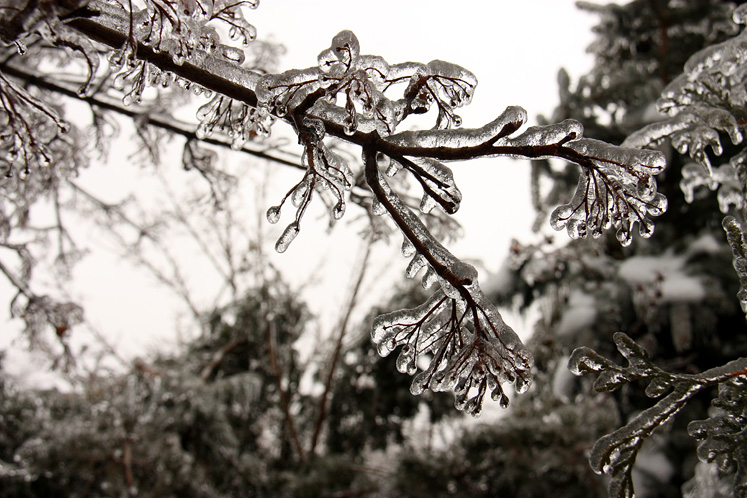 Toronto Photos :: Toronto  Misc :: Winter - ice on the branch