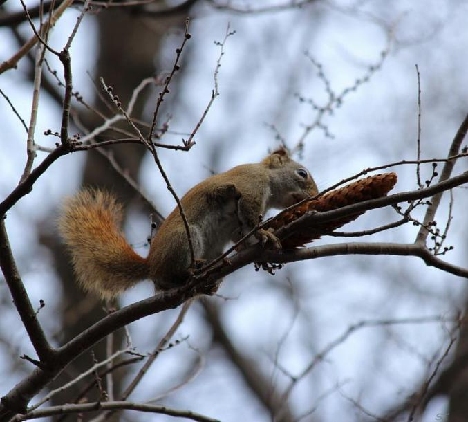 Toronto Photos :: North York :: Mmm... yammy!!!!  A squirrel on a tree branch