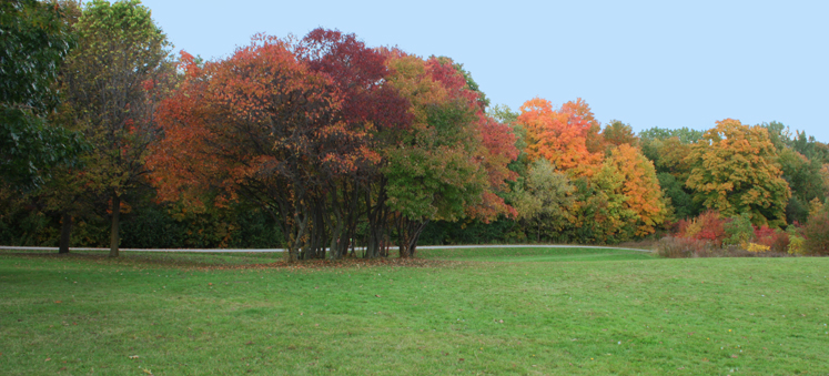 Toronto Photos :: North York :: North York. Fall - G Ross Lord Park