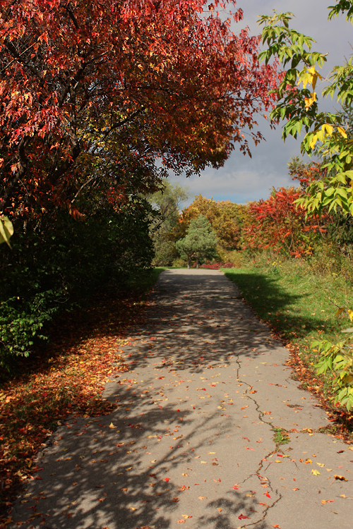 Toronto Photos :: North York :: North York - Fall - G Ross Lord Park