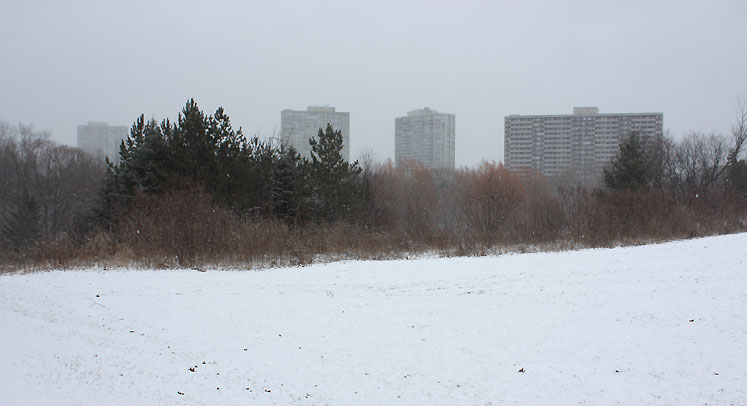 Toronto Photos :: Winter :: North York - Winter - G Ross Lord Park