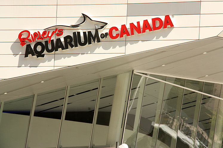 Toronto Photos :: Ripley`s Aquarium :: Ripley`s Aquarium in Toronto