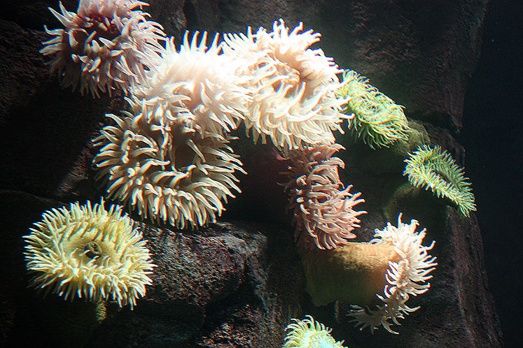 Toronto Photos :: Ripley`s Aquarium :: Sea sponges in Ripley`s Aquarium