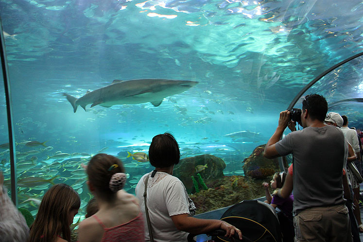 Toronto Photos :: Ripley`s Aquarium :: Shark watching in Ripley`s Aquarium