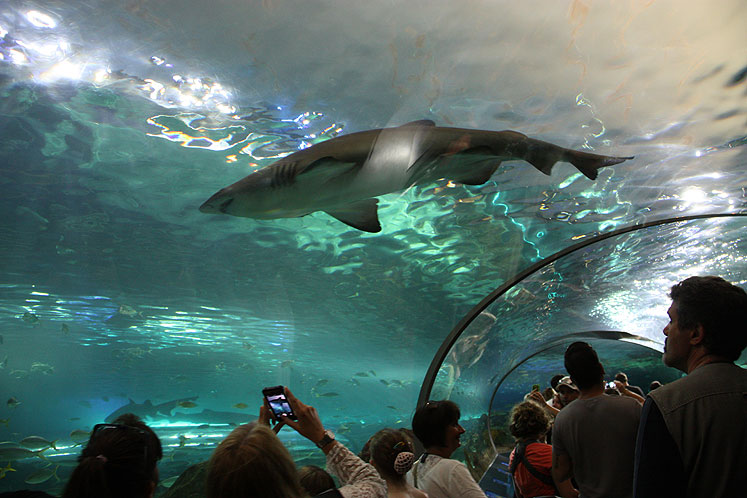 Toronto Photos :: Ripley`s Aquarium :: Shark watching in Ripley s Aquarium