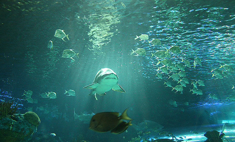 Toronto Photos :: Torontonian :: A shark i Ripleys Acquarium