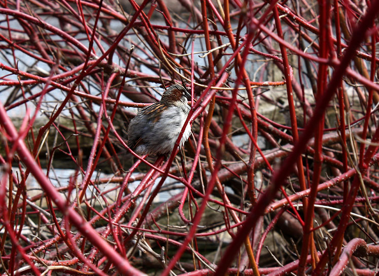 Toronto Photos :: Toronto Island Park :: Centre Island - a little sparrow
