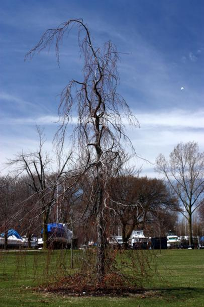 Toronto Photos :: Toronto Island Park :: A tree growing on Centre Island