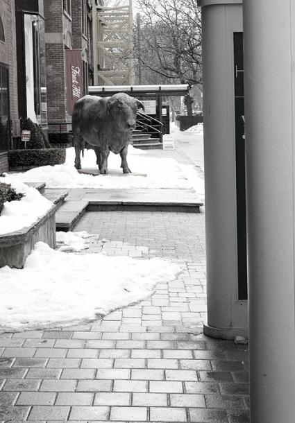 Toronto Photos :: Yorkville :: A sculpture of a cow in Yorkville